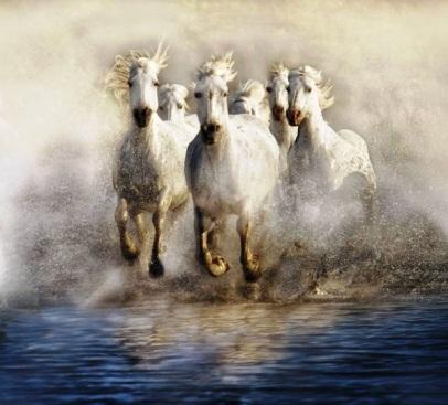 Danse-Aquatique_Carmague horses