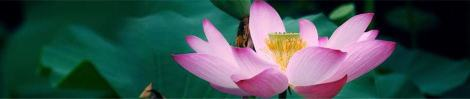 lotus-of-enlightenment_1066x198
